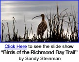 "Sandy Steinman's ""Birds of the Bay Trail"""